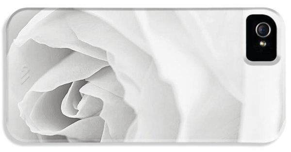 White Rose IPhone 5 Case by Elena Elisseeva