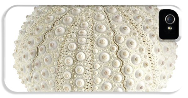 White Sea Urchin Shell IPhone 5 Case by Science Photo Library