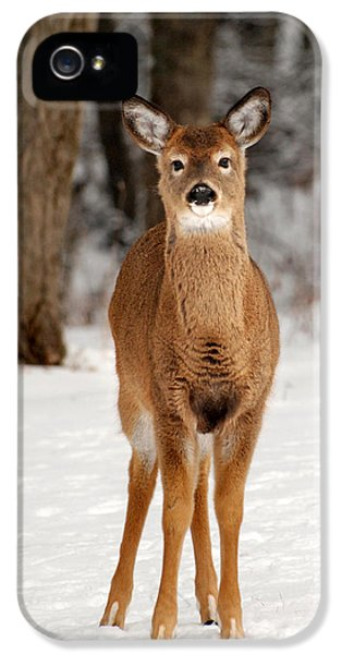 Whitetail In Snow IPhone 5 Case