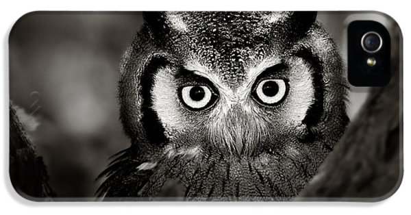 Whitefaced Owl IPhone 5 Case by Johan Swanepoel