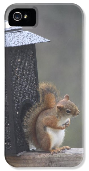 Who You Looking At IPhone 5 Case by Michael Collins