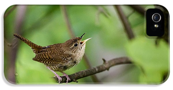 Wild Birds - House Wren IPhone 5 Case by Christina Rollo
