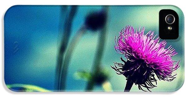 Wild Flower IPhone 5 Case