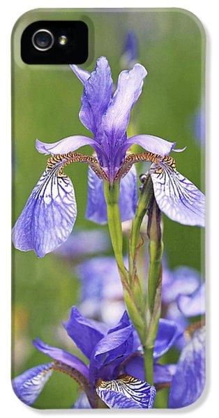 Wild Irises IPhone 5 Case