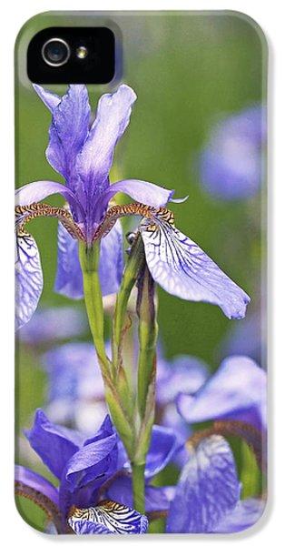 Wild Irises IPhone 5 Case by Rona Black