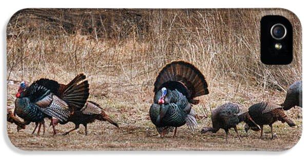 Wild Turkeys IPhone 5 Case