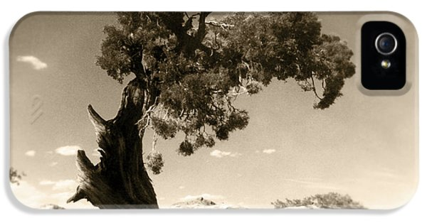 Wind Swept Tree IPhone 5 Case by Scott Norris