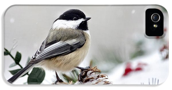 Winter Chickadee IPhone 5 Case