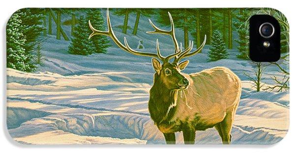 Bull iPhone 5 Case - Winter Forage - Elk by Paul Krapf