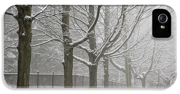 Winter Trees And Road IPhone 5 Case
