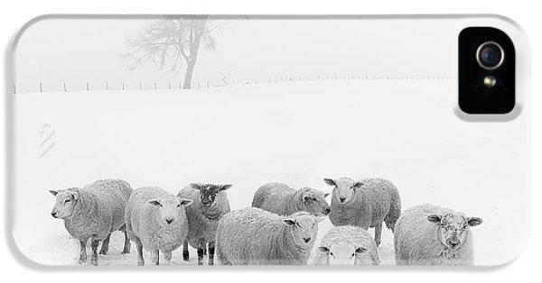 Winter Woollies IPhone 5 Case by Janet Burdon