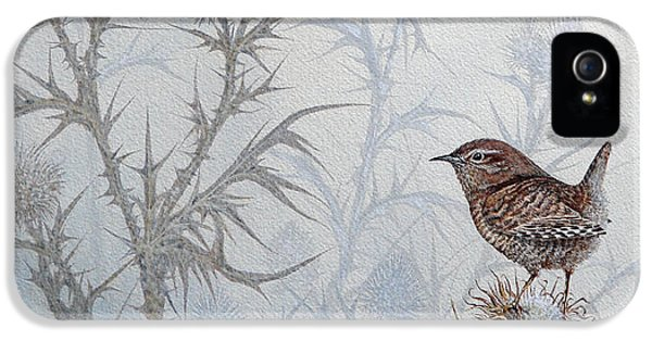 Winter Wren IPhone 5 Case
