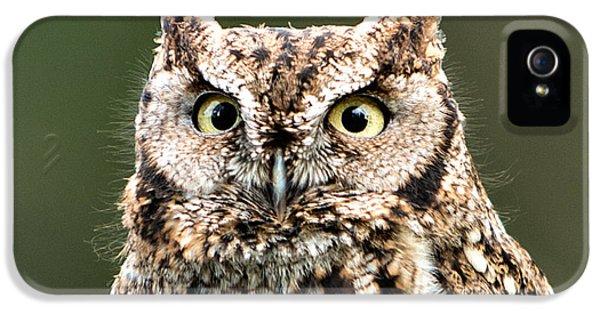 Wise Eyes IPhone 5 Case by Mary Jo Allen