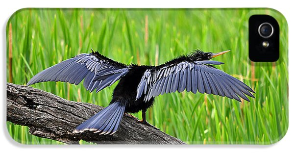 Wonderful Wings IPhone 5 Case by Al Powell Photography USA