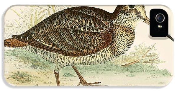 Woodcock IPhone 5 / 5s Case by Beverley R Morris