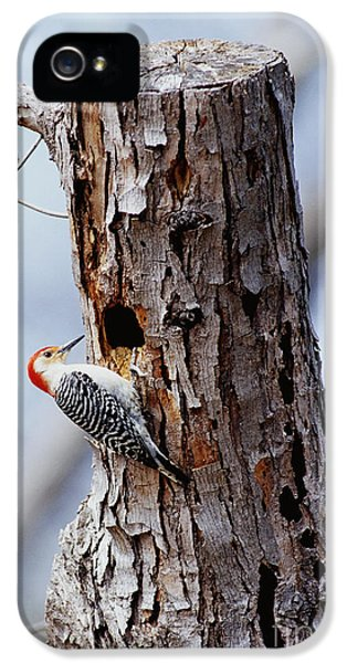 Woodpecker And Starling Fight For Nest IPhone 5 Case