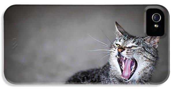 Yawning Cat IPhone 5 Case by Elena Elisseeva