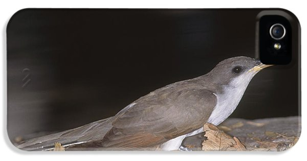 Yellow-billed Cuckoo IPhone 5 Case by Gregory G. Dimijian, M.D.