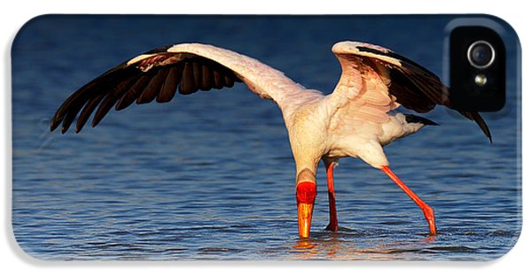 Yellow-billed Stork Hunting For Food IPhone 5 Case by Johan Swanepoel