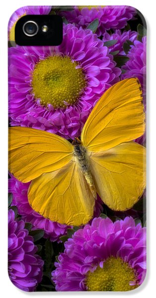 Yellow Butterfly And Pink Flowers IPhone 5 Case