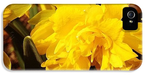 Yellow Daffodils IPhone 5 Case