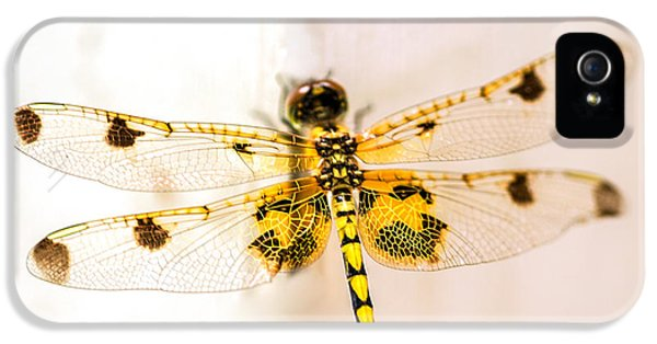 Yellow Dragonfly Pantala Flavescens IPhone 5 Case by Iris Richardson
