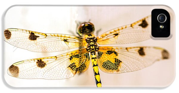 Dragon iPhone 5 Case - Yellow Dragonfly Pantala Flavescens by Iris Richardson