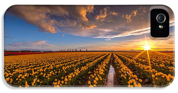 Yellow Fields And Sunset Skies IPhone 5 Case