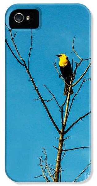 Yellow-headed Blackbird IPhone 5 Case by Robert Bales