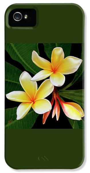Yellow Plumeria IPhone 5 Case