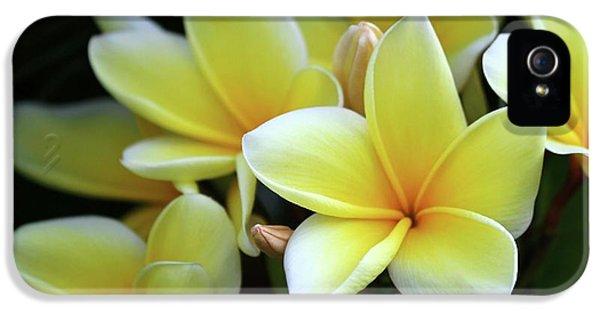 Yellow Plumeria Cascade IPhone 5 Case