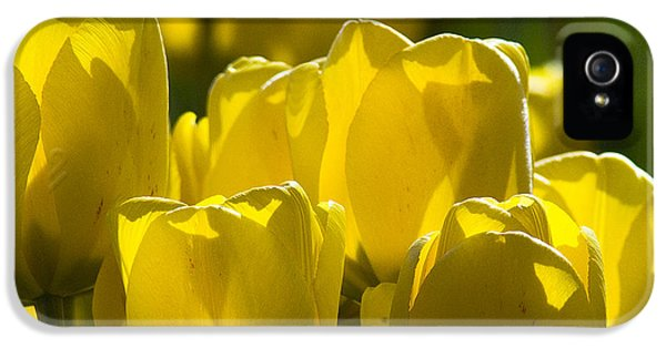Yellow Tulips  IPhone 5 Case by Yulia Kazansky