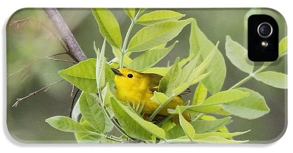 Yellow Warbler Surprise IPhone 5 Case by Dan Sproul