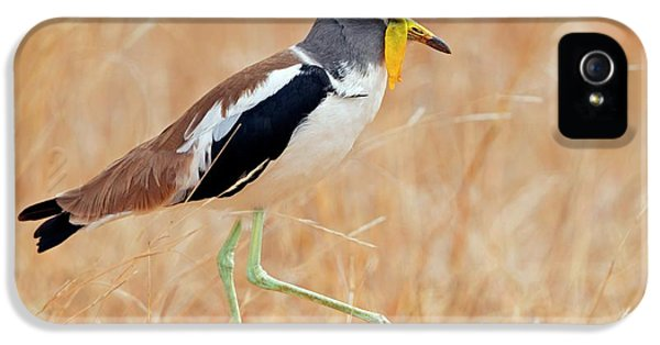 Yellow-wattled Lapwing IPhone 5 Case