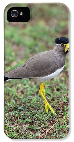 Yellow-wattled Lapwing IPhone 5 Case by Peter J. Raymond