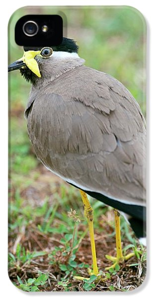 Yellow Wattled Lapwing IPhone 5 Case by Tony Camacho