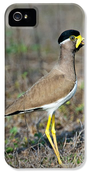 Yellow-wattled Lapwing Vanellus IPhone 5 Case by Panoramic Images
