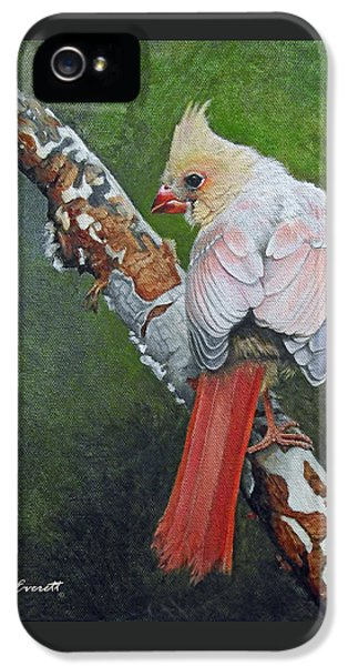 Young Cardinal  IPhone 5 Case by Ken Everett