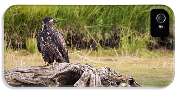 Young Eagle On A River Bed IPhone 5 Case by Andres Leon