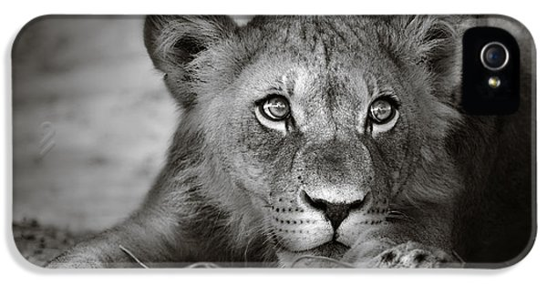Young Lion Portrait IPhone 5 Case by Johan Swanepoel