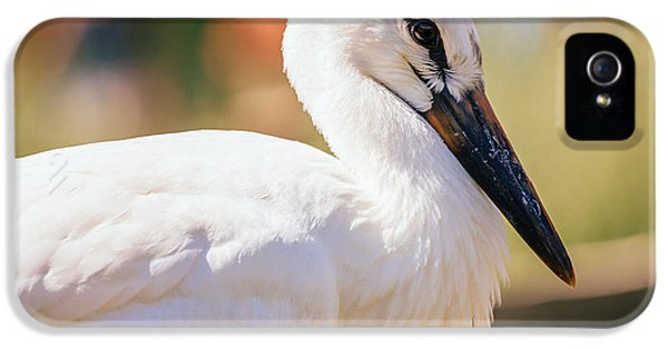 Young Stork Portrait IPhone 5 Case by Pati Photography
