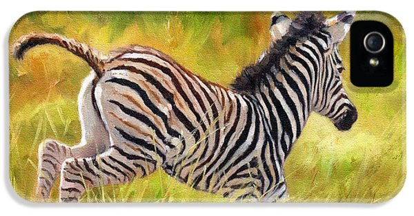 Young Zebra IPhone 5 / 5s Case by David Stribbling