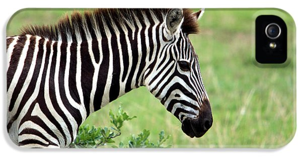 Zebra IPhone 5 Case by Aidan Moran