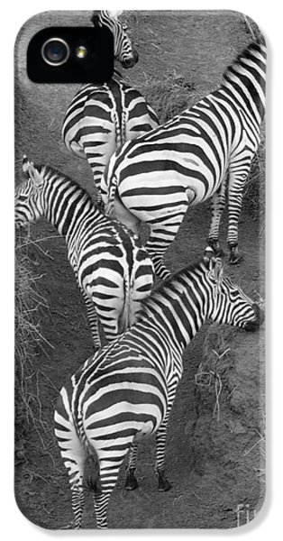 Zebra Design IPhone 5 Case by Carol Walker