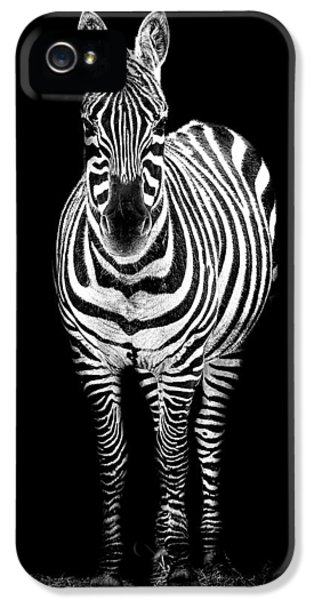 Zebra iPhone 5 Case - Zebra by Paul Neville