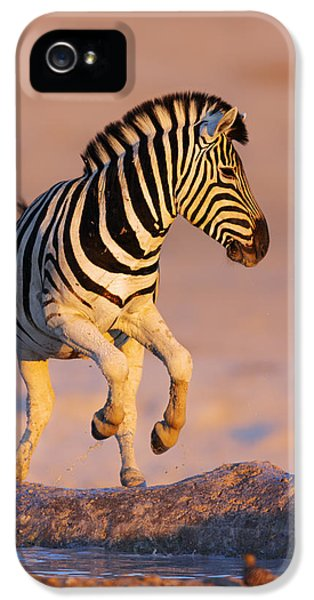 Zebras Jump From Waterhole IPhone 5 Case by Johan Swanepoel