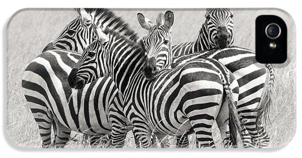 Zebras IPhone 5 Case