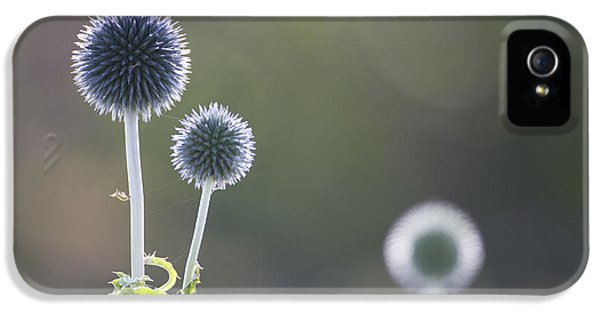 Blue Globe Thistle IPhone 5 Case by Don Hooper