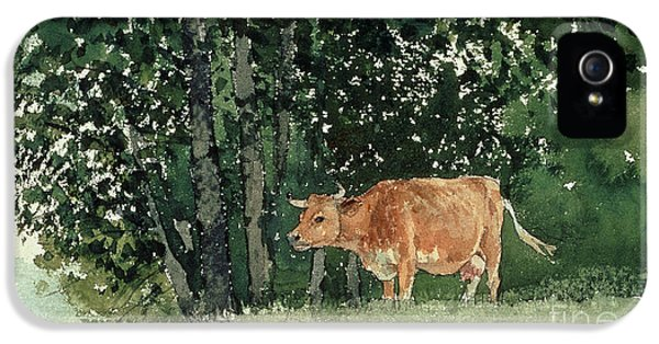 Cow In Pasture IPhone 5 Case by Winslow Homer