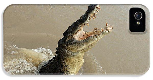 Salt Water Crocodile 2 IPhone 5 Case by Bob Christopher